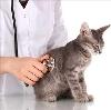 Ветеринарные клиники в Любытино